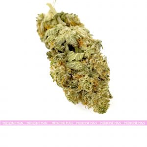 Greasy Pink Indica