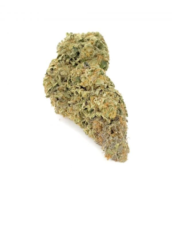Mother Theresa Indica